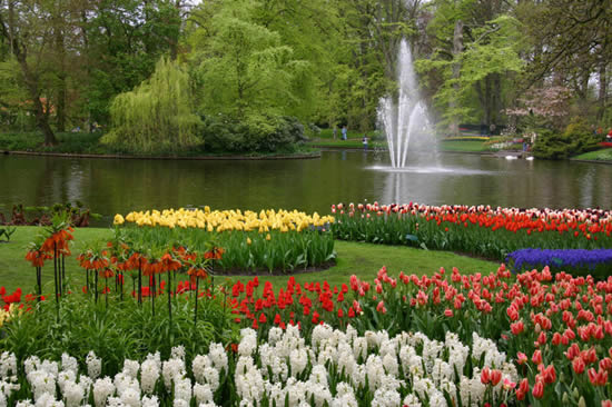 Composition florale de jacinthes et tulipes au Keukenhof aux Pays Bas. Photo by Alessandro Vecchi
